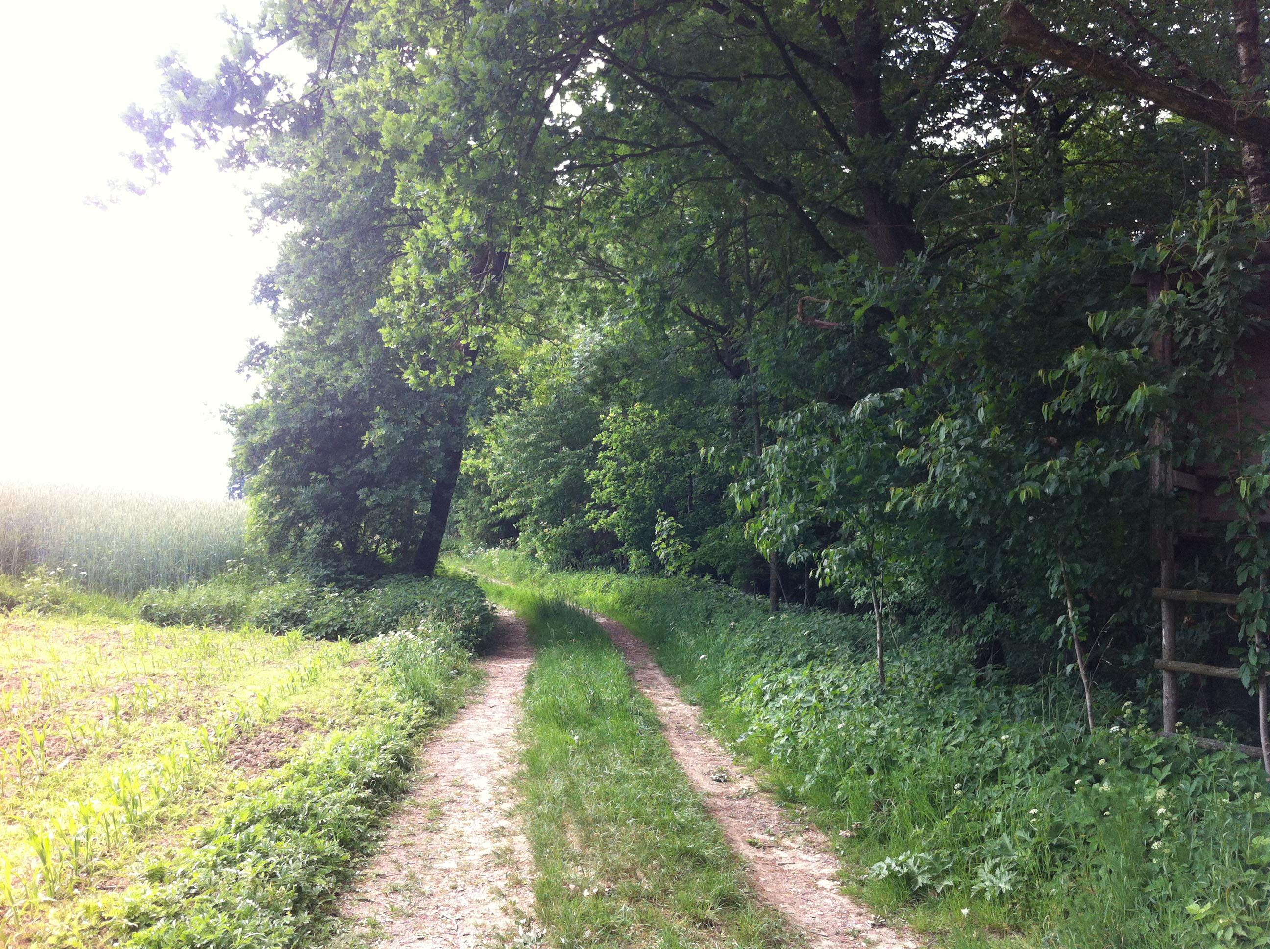Weg bei Waldlichtung